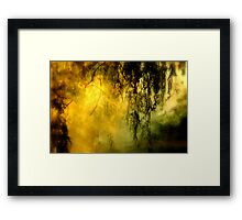 Misty Willow Framed Print