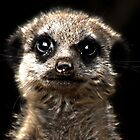 Baby Meerkat by James  Leader