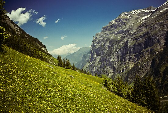 Lauterbrunnen Valley in Bloom by Jeff Goulden