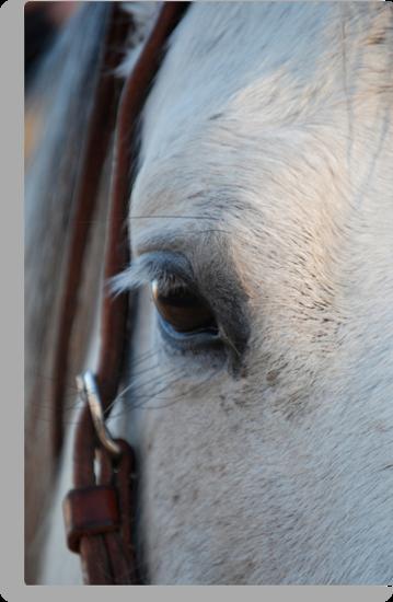Through the Eye of a Horse by Suz Garten