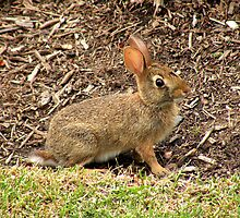 'Bunny Camoflage' by Scott Bricker