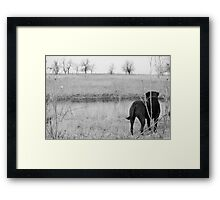 Labrador by Pond Framed Print