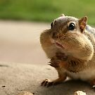 &quot;Who me?  I didn&#x27;t take the peanuts!&quot; by Lori Deiter