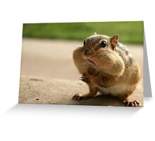 """Who me?  I didn't take the peanuts!"" Greeting Card"