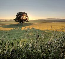 A Yorkshire Dales Sunrise  by SteveMG