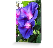 A Pair of Vibrant Morning Glories In Full Bloom Greeting Card