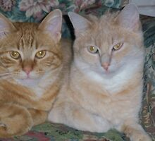COLBY & CHEDDAR by Diane Trummer Sullivan