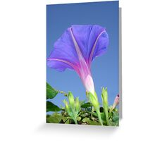 Mauve Morning Glory Against Cerulean Sky Greeting Card