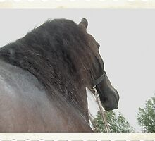 Taken from underneath this young frisian horse by theheijt