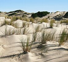 The Coorong by Leeo