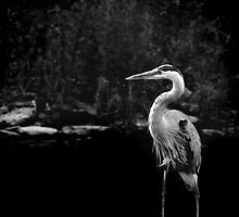 Great Blue Heron by Renee Dawson