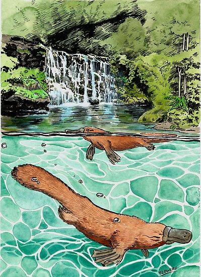 Platypus Falls by SnakeArtist