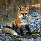 """"""" Red Fox Pup """" by fortner"""