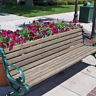 Sunny Bench with Floral Essence by Nora Caswell