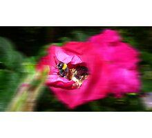 Living Motion  Photographic Print
