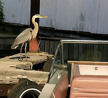 heron in the boathouse by 1busymom