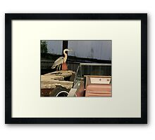 heron in the boathouse Framed Print