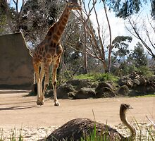 Long Necks by Carol Ferbrache