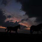"""""""horses @ Dusk"""" by markfalmouth"""
