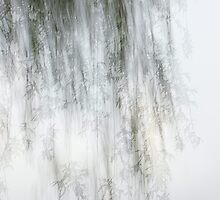 Impressions of a willow by hatric