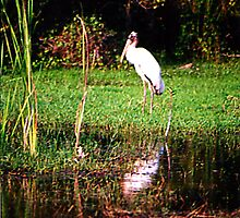 Stork Stopped by Daneann