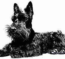 Scottish Terrier Black and White by Chongatoka