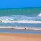 Birds on Playalinda Beach by twinmoon