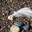 Gull Feather by AuntieJ