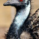 Emu Portrait by sarah ward