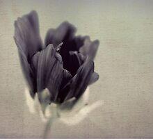 Awakening by Leanna Lomanski