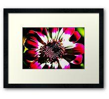 Red Flower Fractilius Framed Print