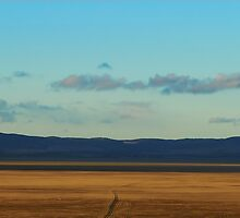 plains near Canberra by Danny  Waters
