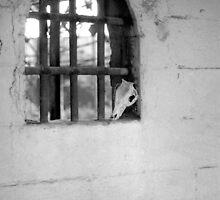 Window by Chongatoka