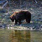 """Cinnamon"" Black Bear - Reflection by Stephen Beattie"