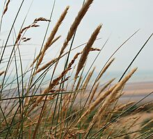 Long Grass on the Camber Dunes by Darren Buss