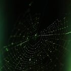 web by Acia Lo