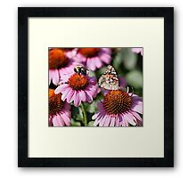 'Painted Lady and Bumble Bee' Framed Print