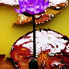 Water Lily by Dean Gale