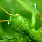 grasshopper portrait by piscari