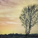 Tree by steffen