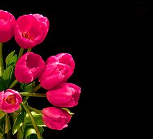 Pink Tulips... by Janine  Hewlett