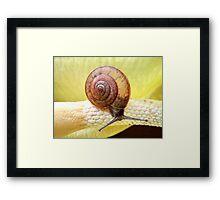 Perfect spiral Framed Print