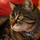 Contemplation (The Feral Oriental Tabby) by warriorprincess