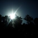 Treetop Sunrise by Daneann