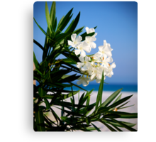 White Oleander Canvas Print
