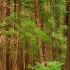 Temperate Rain Forest by Mike Freedman