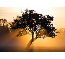 Burning Tree Photographic Print