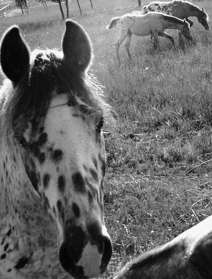 neighborhood horses #7 by Anthony DiMichele