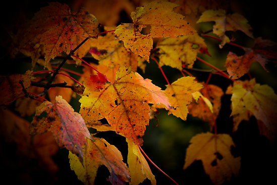 Autumn Colors by Charles Plant