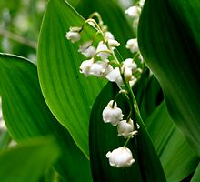 Lily-of-the-valley by mixtaperequiems